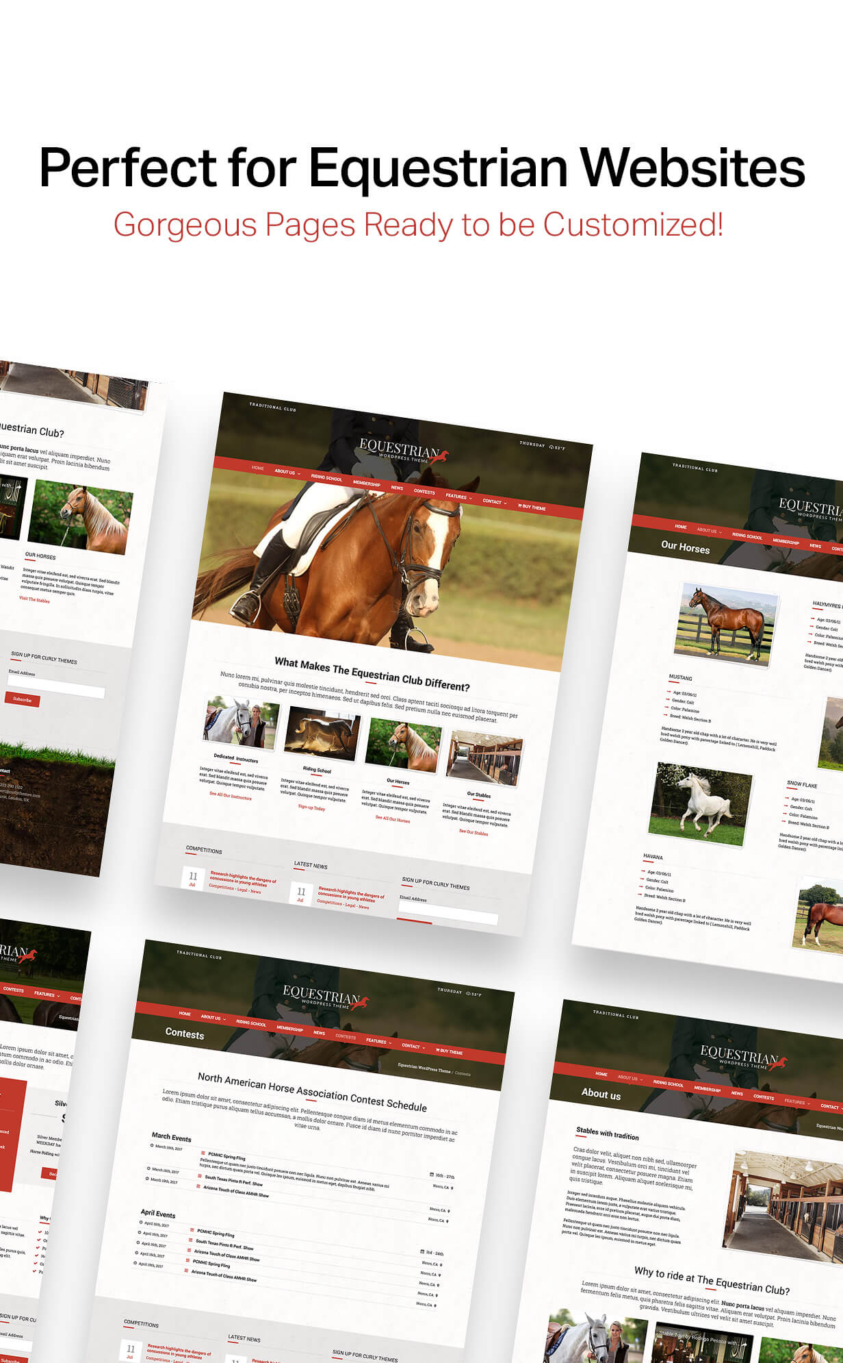 Equestrian - Horses and Stables WordPress Theme - 4